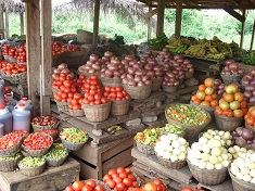 Picture of Raw materials ready for fermentation in Ghana