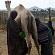 Læs mere om: Fødevareforskere hjælper Afrika med at skabe eksport af kamelmælk